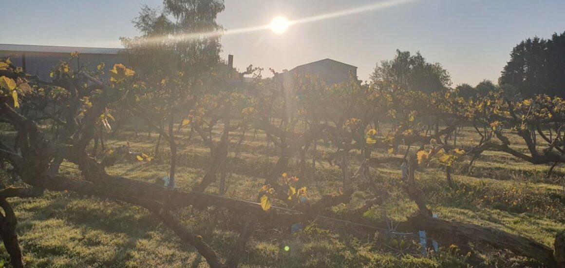 little-oak-vineyard-slider-3