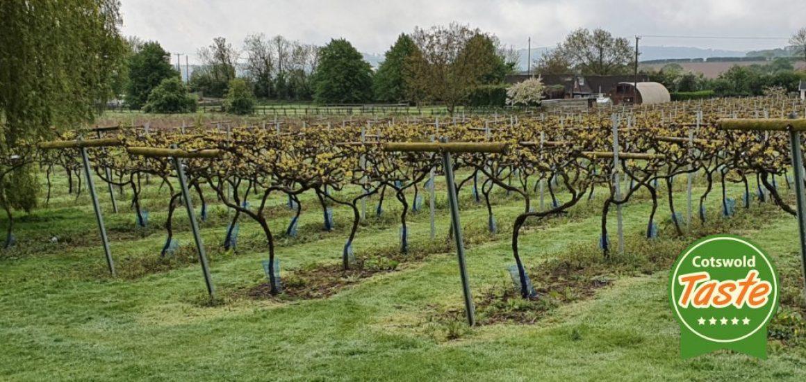 little-oak-vineyard-cotswold-taste