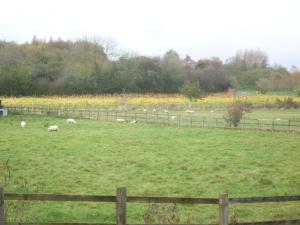 little-oak-vineyard-2014-autumn-2
