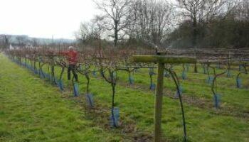 little-oak-vineyard-frost-protection-sprinkler-test-1